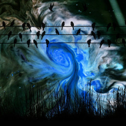 freetoedit snoriginals background blue birds