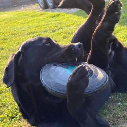 dog doggie playful crazy crazydog freetoedit