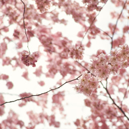 flowers nature spring background backgrounds freetoedit