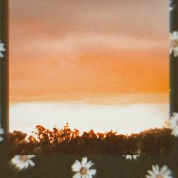freetoedit sunset polaroid flowers