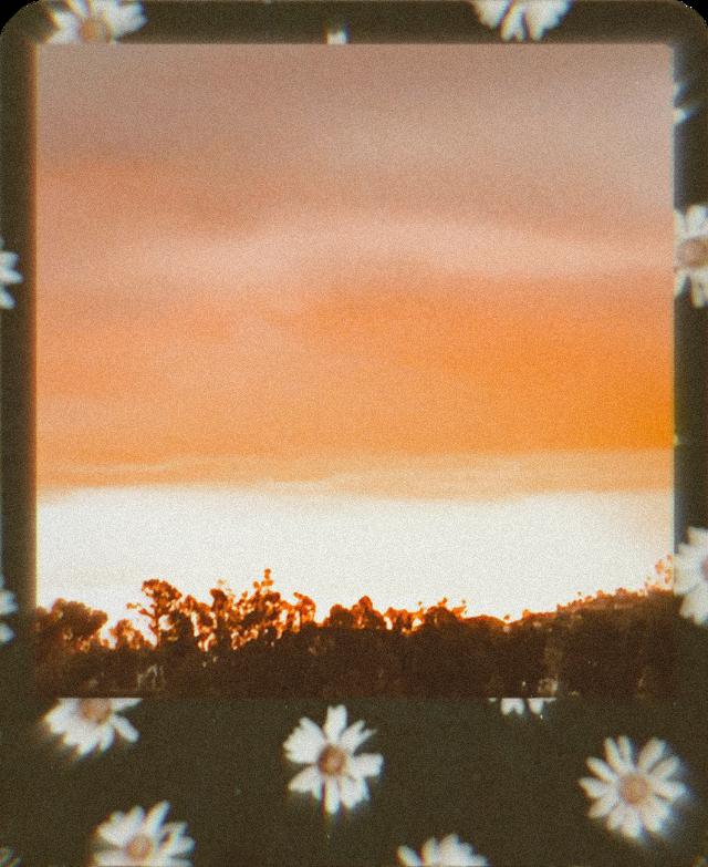 #freetoedit #sunset #polaroid #flowers