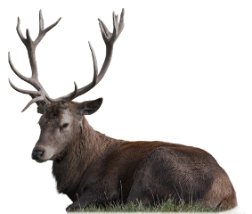 animal deer stag buck nature freetoedit