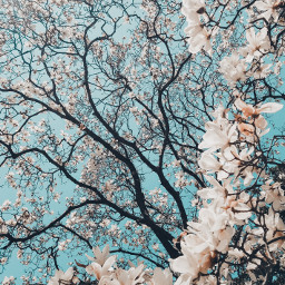 spring flowers nature background backgrounds freetoedit