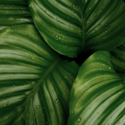 nature plant green background backgrounds freetoedit