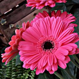 freetoedit pcflowersnearyou flowersnearyou