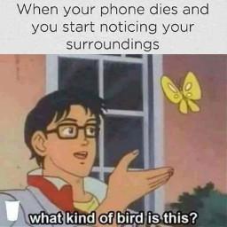 memes meme funny freetoedit