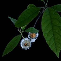 plants plant freetoedit