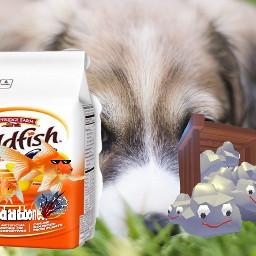 goldfish pets petrock freetoedit