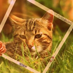 colorsplash cat kawaii cute vintage freetoedit