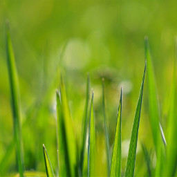 freetoedit grass nature green color
