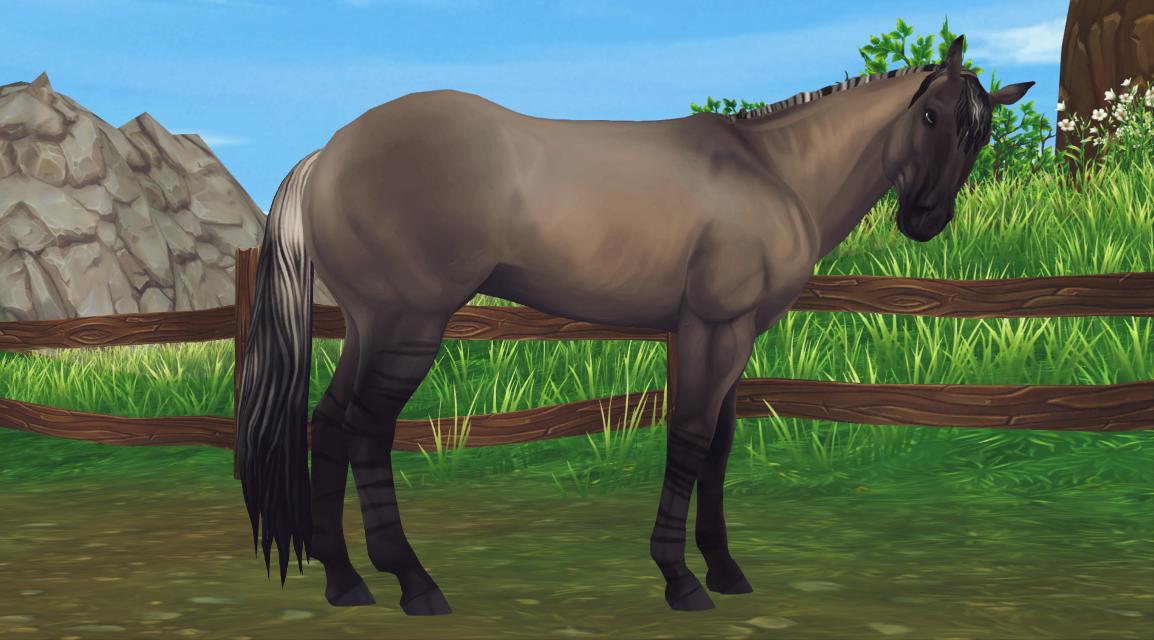 #freetoedit #horse