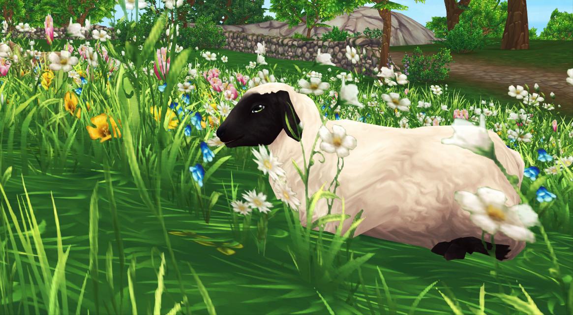 #freetoedit #sheep