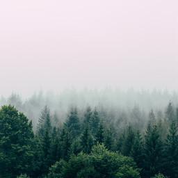 nature trees background backgrounds freetoedit