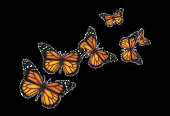 butterfly butterflies aesthetic useit orange freetoedit