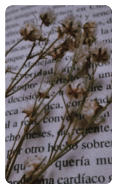freetoedit book flower quote tumblr