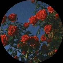 freetoedit rosas flower red tumblr