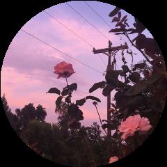 sky flowers aestheticsky aesthetic tumblr freetoedit