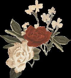 aesthetic flower aestheticflower aestheticflowers flores freetoedit