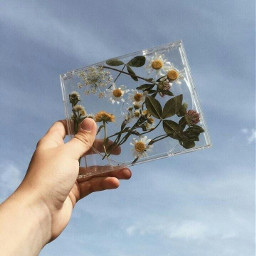 freetoedit aesthetic aestheticflower margarita trumblr