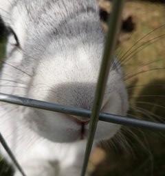 animaleye animaux freetoedit