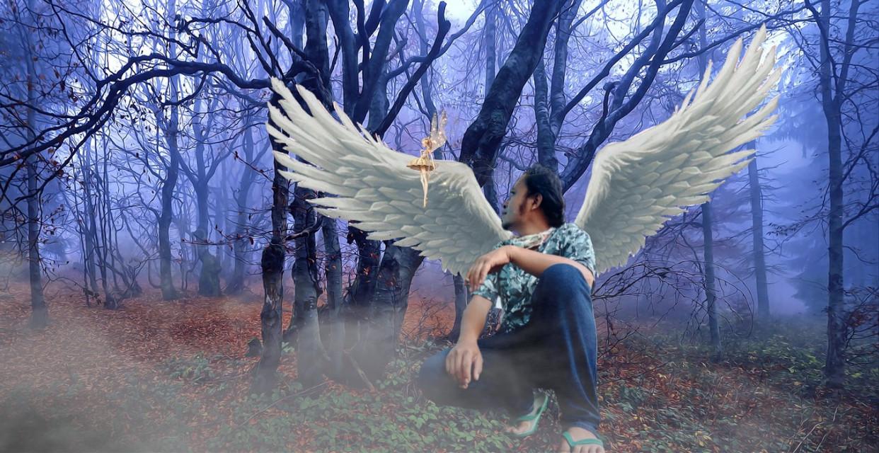 #freetoedit #malaikat #sayap #hutan