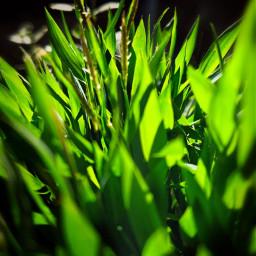 green macro grass greenminimalism pcgreenminimalism