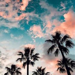 beautifulclouds colorfulsummer palmtrees freetoedit