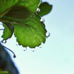 freetoedit dewdrops myoriginalphoto pcgreenminimalism greenminimalism