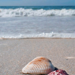 beachtime nature seashells seaview depthoffield freetoedit