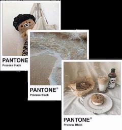 pantone brown choco pallete aesthetic freetoedit