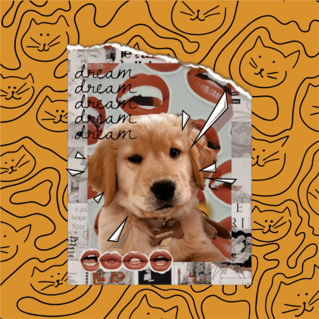 #thechainsmokers #chainsmokers #andrewtaggart #drewtaggart #alexpall #mooshu #dog #cutedog #doodles #doodle #cool