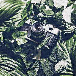 green aesthetic greenaesthetic greenery photography