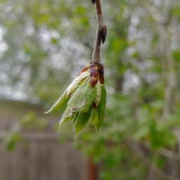 nature tree branch spring closeupshot freetoedit