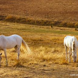 horses landscape white sunset beautiful