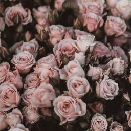 template wallpaper flowersinthegarden background