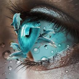 freetoedit dolphins picsart tools surreal