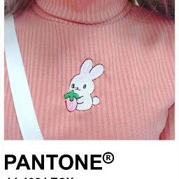 aesthetic peachy peach pantone square