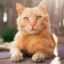 cat kitty cats animal pet freetoedit