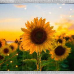 sunshine averygrace