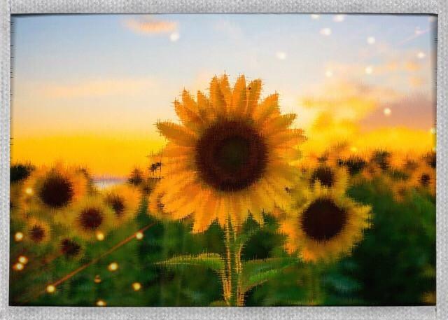 Sunflowers💛💛💛#sunshine #averygrace