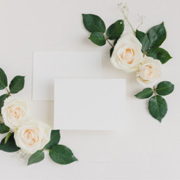 flowers roses background backgrounds freetoedit