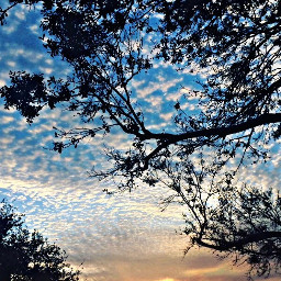 freetoedit sky tree clouds nature