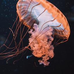 aesthetic jellyfish background backgrounds freetoedit