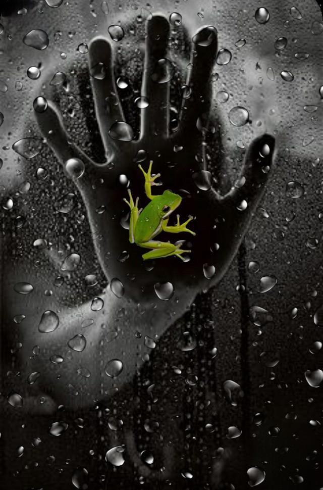 #freetoedit #picsart #remixed #remixit #myedit #photoedit #photomanipulation #art #digital #digitalart #digitaledit #madewithpicsart #editedbyme #editedwithpicsart #surreal #surrealism #magical #magic #fantasy #stayinspired #shapes #picsarteffects #lighteffects #unsplash #pexels #pastickers #hand #rain #frog