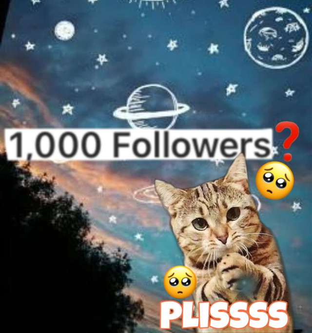 #please 🥺 1k?🦋🧸 i love you 🥀