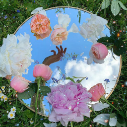 flowers mirror mirrormania hand nature freetoedit
