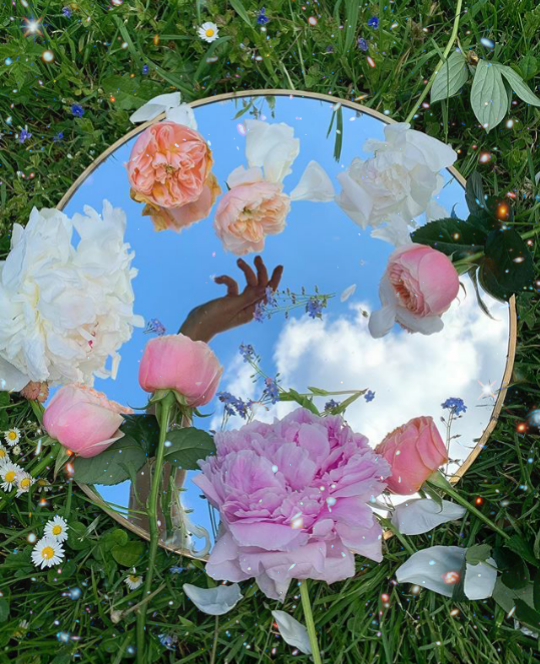Can we be friends? . . #flowers #mirror #mirrormania #hand #nature #freetoedit