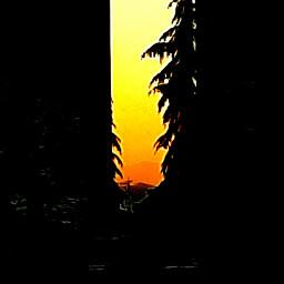 freetoedit sunrise spring stayathome photography