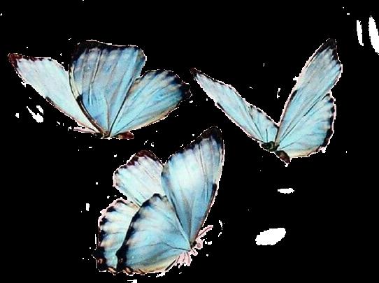 #freetoedit #butterfly #butterflies #mariposa #mariposas #naturaleza #nature #volar