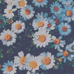 aesthetic aestheticallypleasing daisy flower flowerfield freetoedit